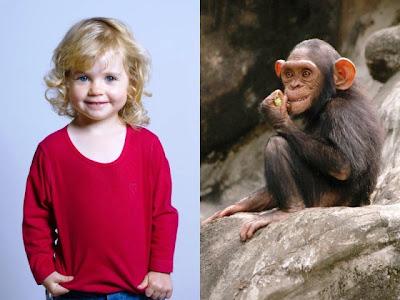 manusia dan simpanse
