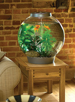 Pictures of Fish Tanks Decorated