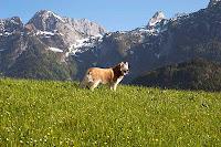 Tennengebirge Austria