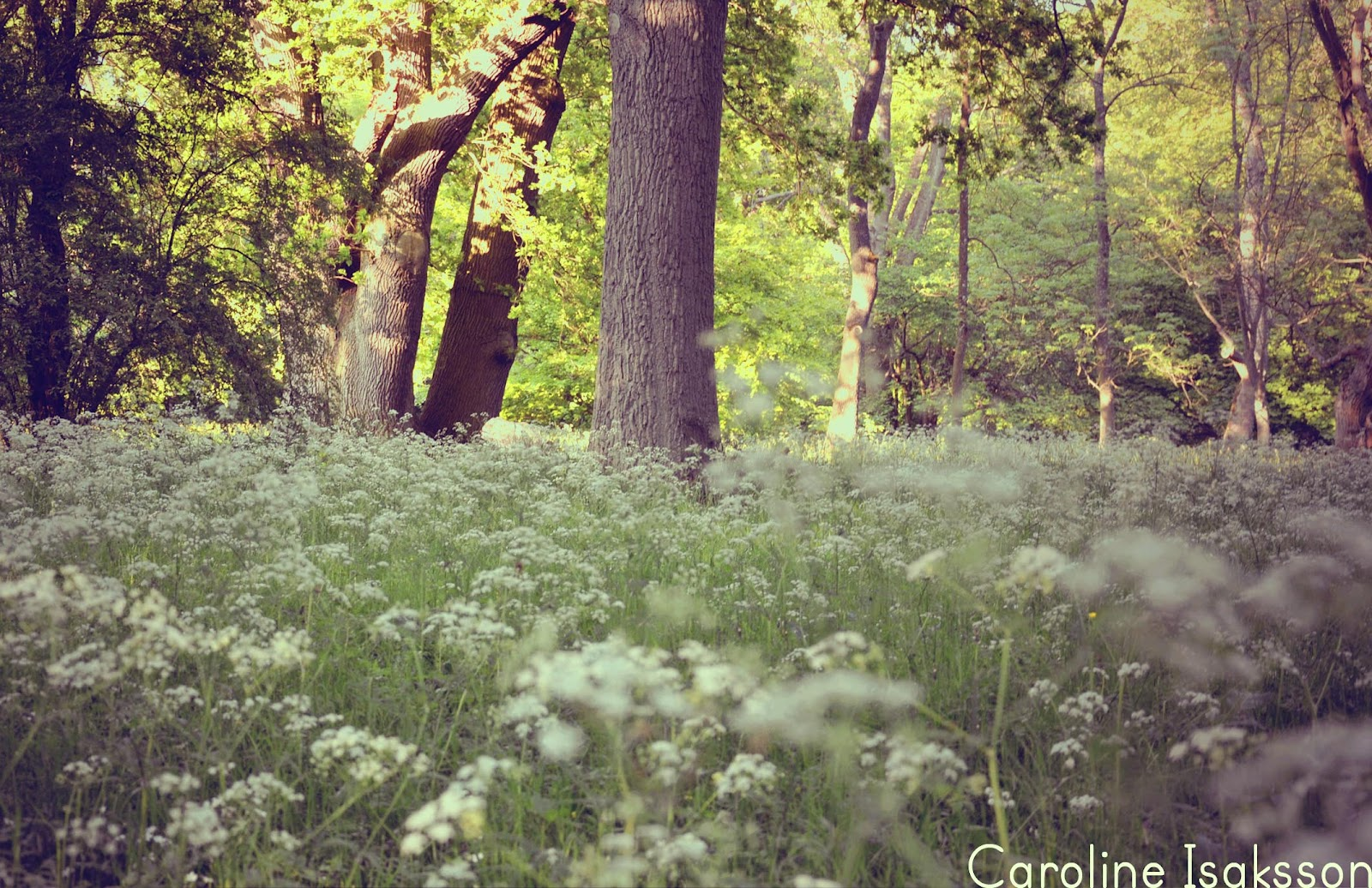 Caisa's inspiration: juni 2012
