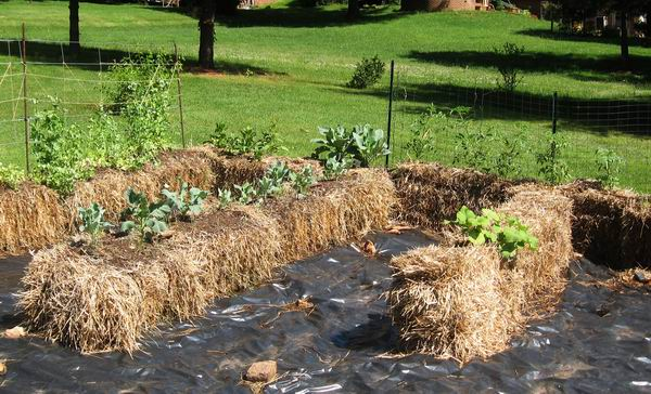 growing plants in hay bales with hay bale gardening? Remember the sad results (i.e. plants ...