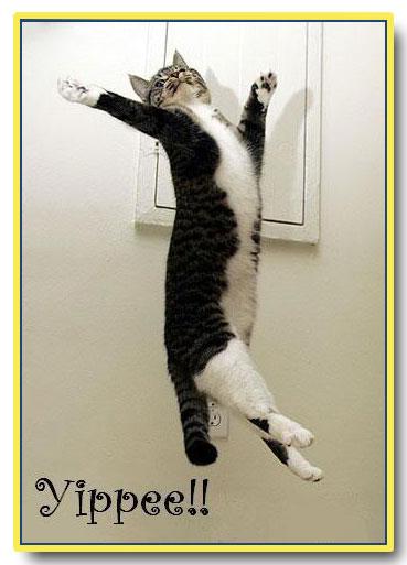yippee cat