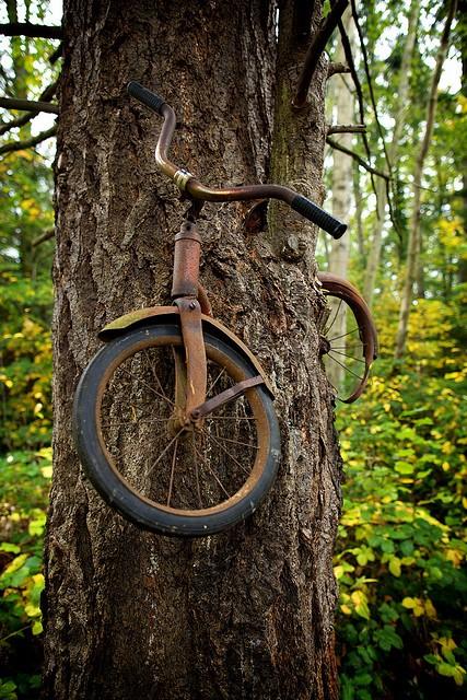 sandwichbike Una+bicicleta+incrustada+en+un+%C3%A1rbol