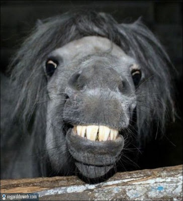 Images droles et incroyables Animal - Cheval v7 - Des milliers de photos drôles et insolites