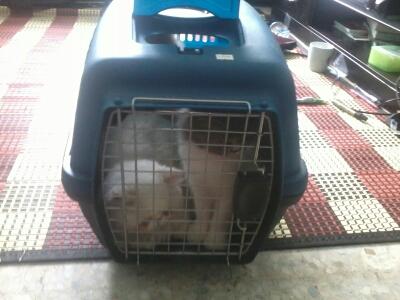 Sunyi Je Rasa Rumah Ni Hari Ni Dah Takde Sekor Pun Kucing