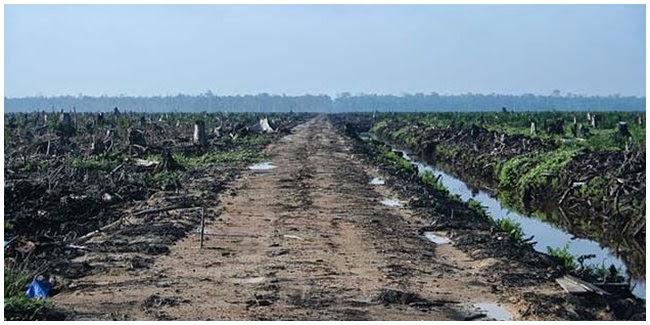Dampak Masalah Lingkungan