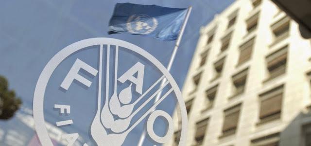Organizacion internacional y Derecho Internacional