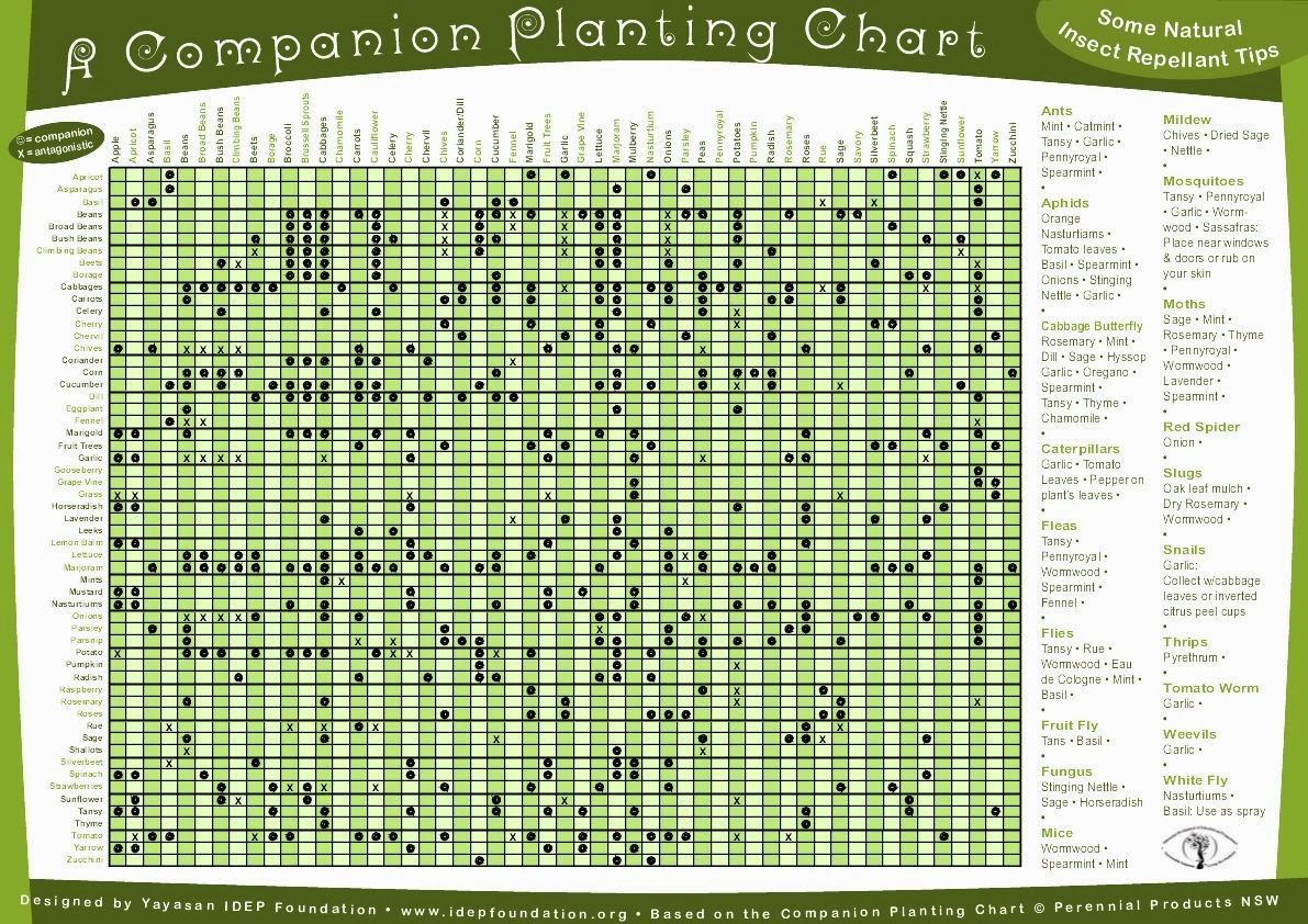 Catholic Creativity Gardening 101 3 Companion Planting
