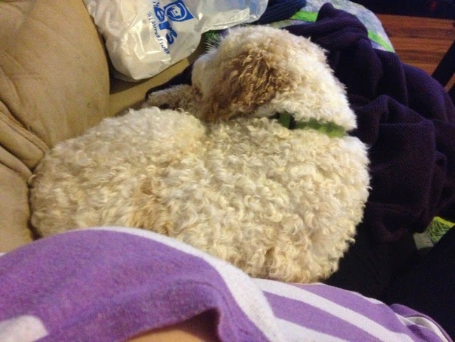 cuddles with Milo
