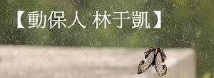 生態專家林于凱【魚狗=鳥】專欄