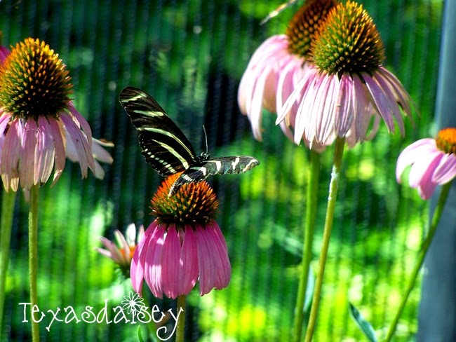 Plants to attract butterflies to your garden 3