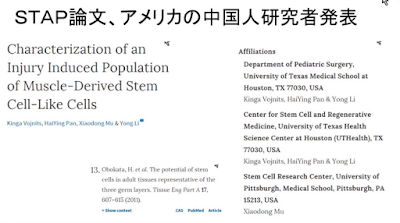 STAP細胞研究 アメリカの論文