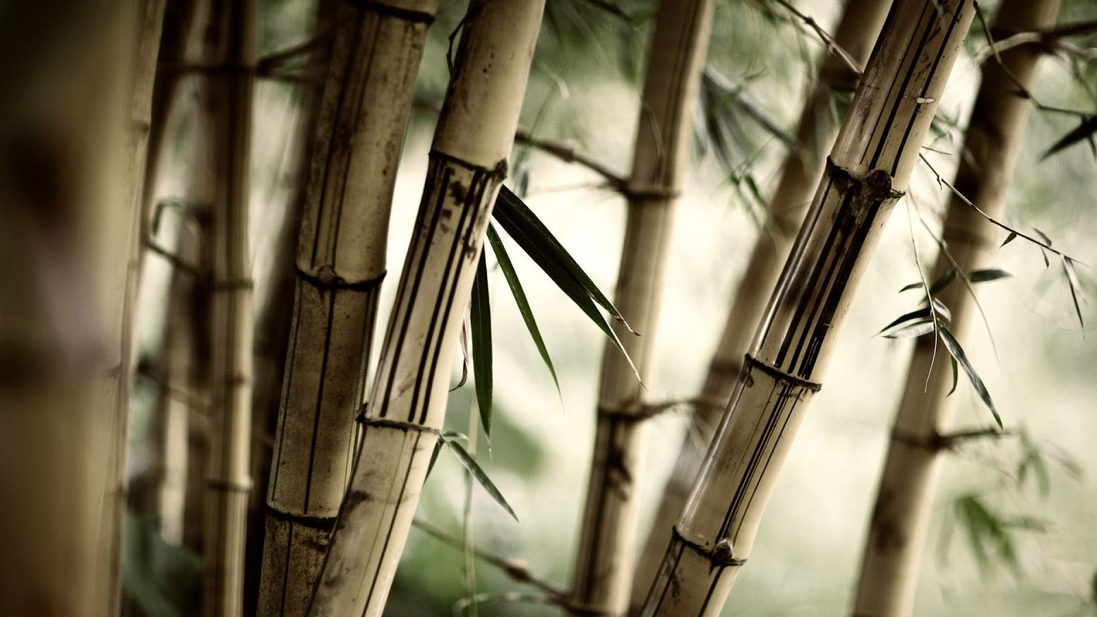 black and white wallpapers bamboo trees wallpaper
