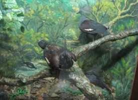 Burung di Museum Zoologi