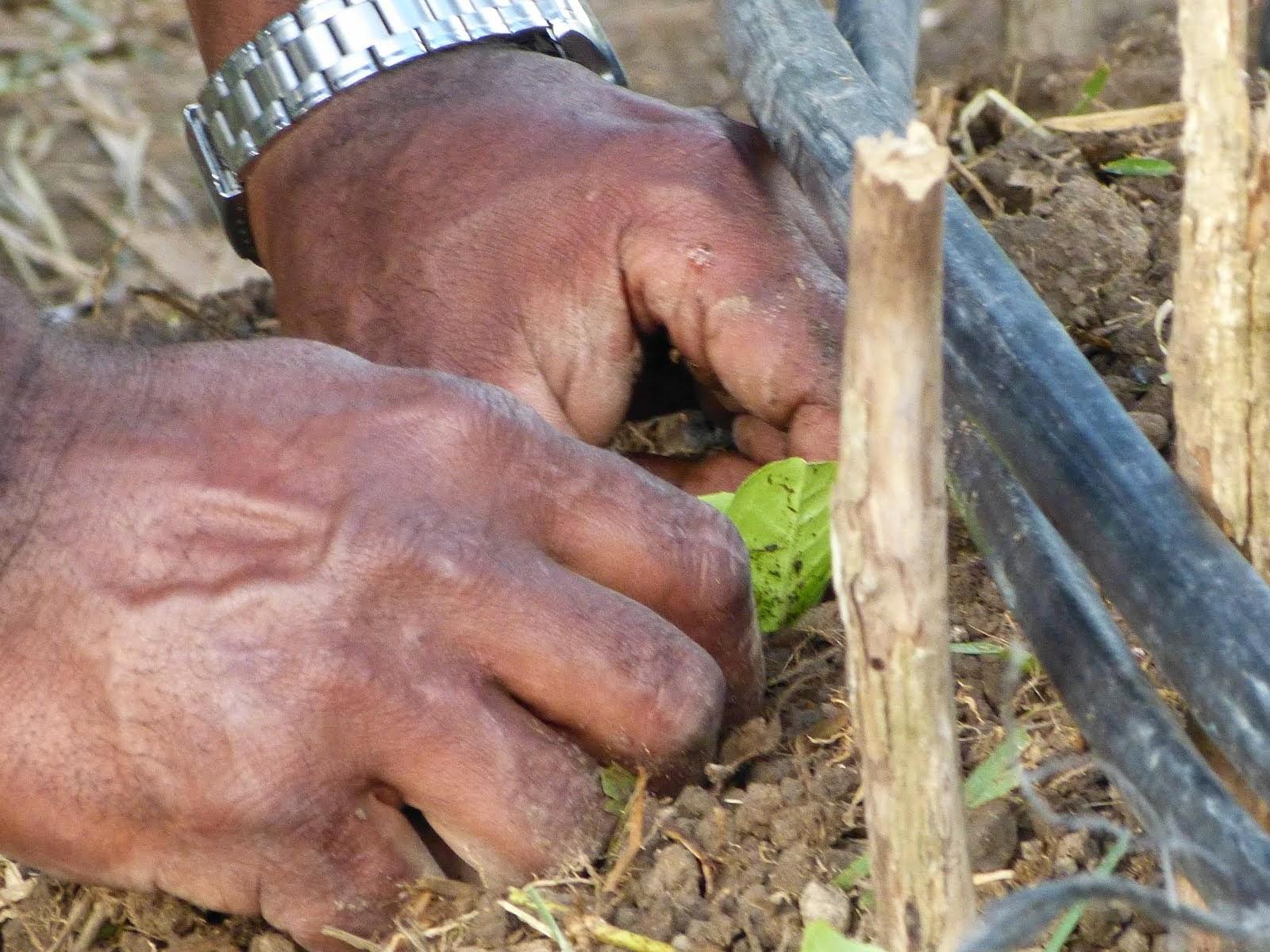 Agriculture sans poison et sans subvention!