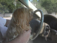 My Dog Drives, Does Yours?