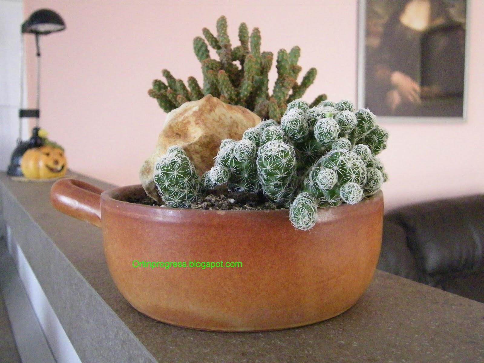 Orti in progress minuscoli giardini di cactus for Foto piante grasse particolari