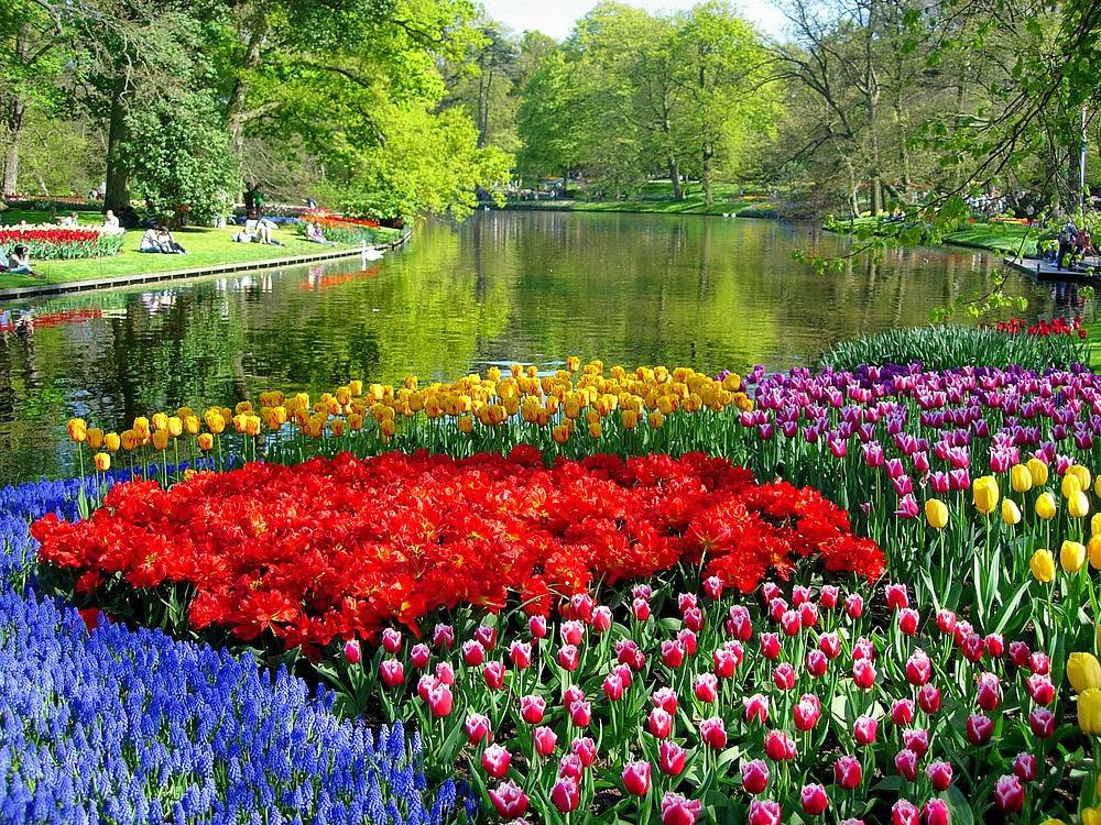 1000 motivos pra viajar os campos de tulipas da holanda - Jardines de holanda ...