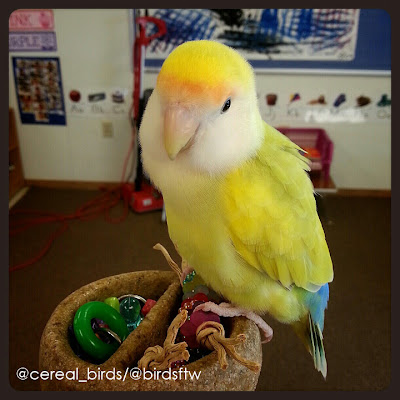 Critters in the Classroom: Birds in the Classroom: Part 1 ...