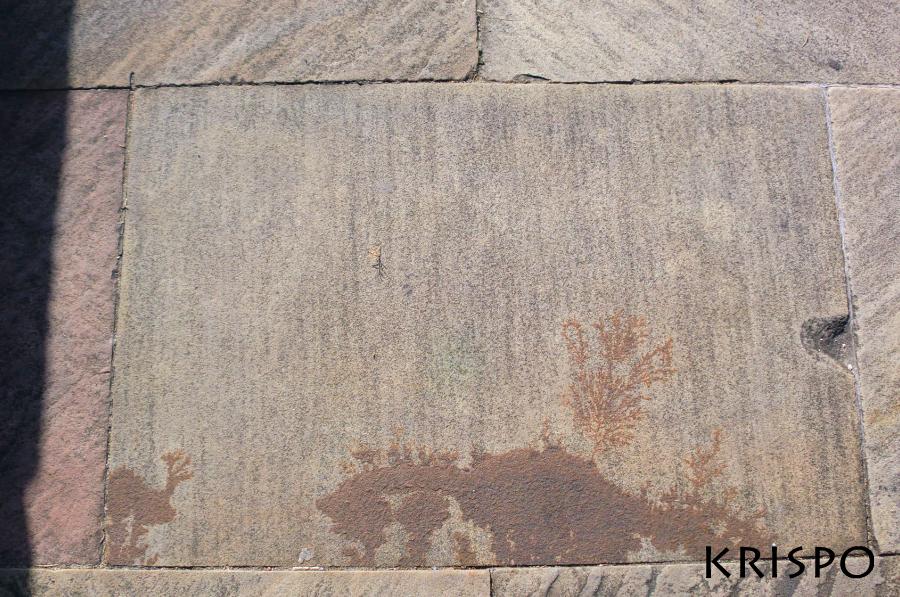loseta con fosiles de piedra