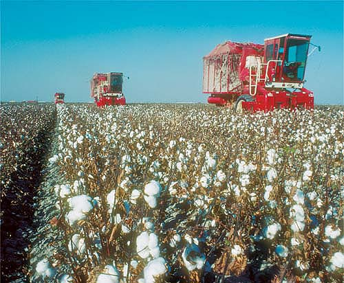 Starrh & Starrh Cotton Growers: $10 Million in Taxpayer Subsidies Behind The 'Tears'