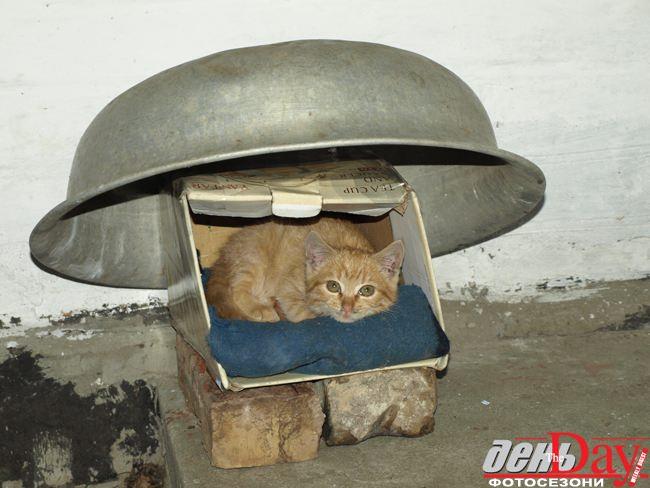 Сострадание к животным animal compassion Киев против убийства  3 Все три случая заражения бешенством произошли с 7 по 19 декабря 2011 прямо в канун новогодних праздников 27 декабря 2011 ветслужбами была проведена