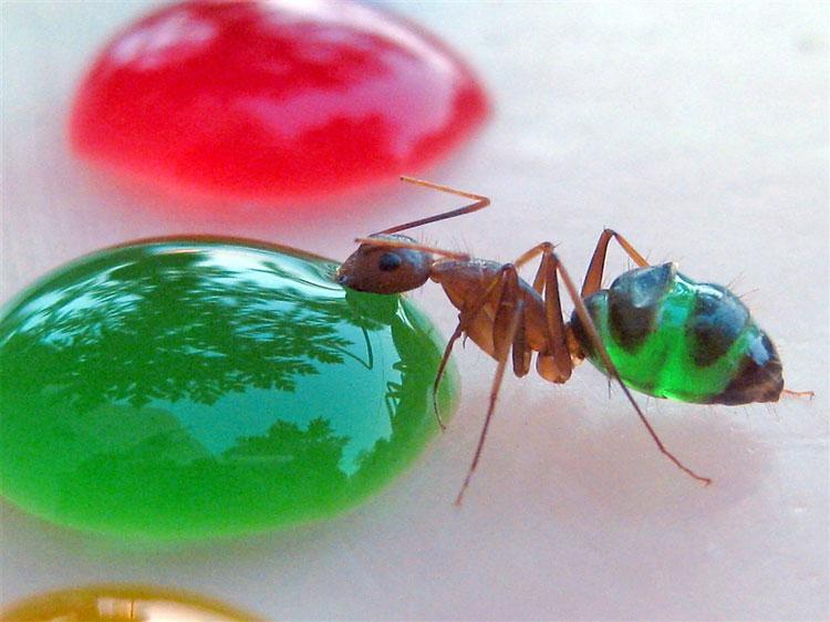 The Regular Joe: Cool Nature Stuff - Colored Ants