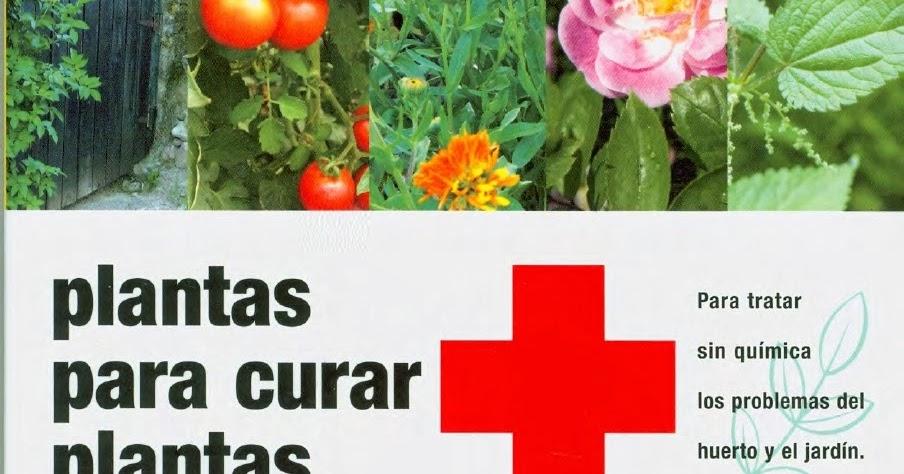 Huerta y jard n bah a blanca plantas para curar plantas for Jardin 935 bahia blanca