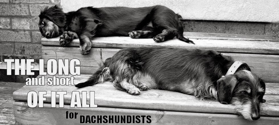 The Long and Short of it All:  A Dachshund Dog News Magazine