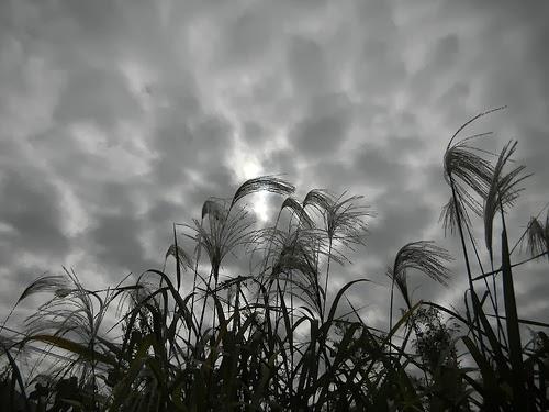 Photoblog for Nikon COOLPIX P1100pj