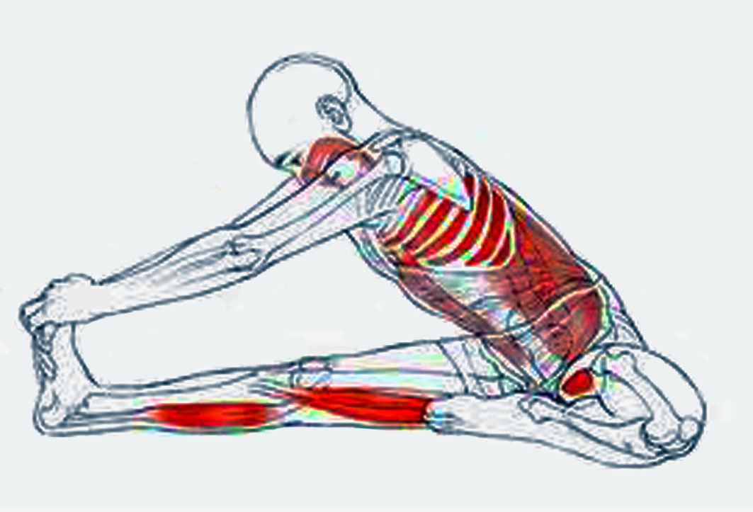 Excelente Anatomía Para El Yoga Cresta - Anatomía de Las Imágenesdel ...