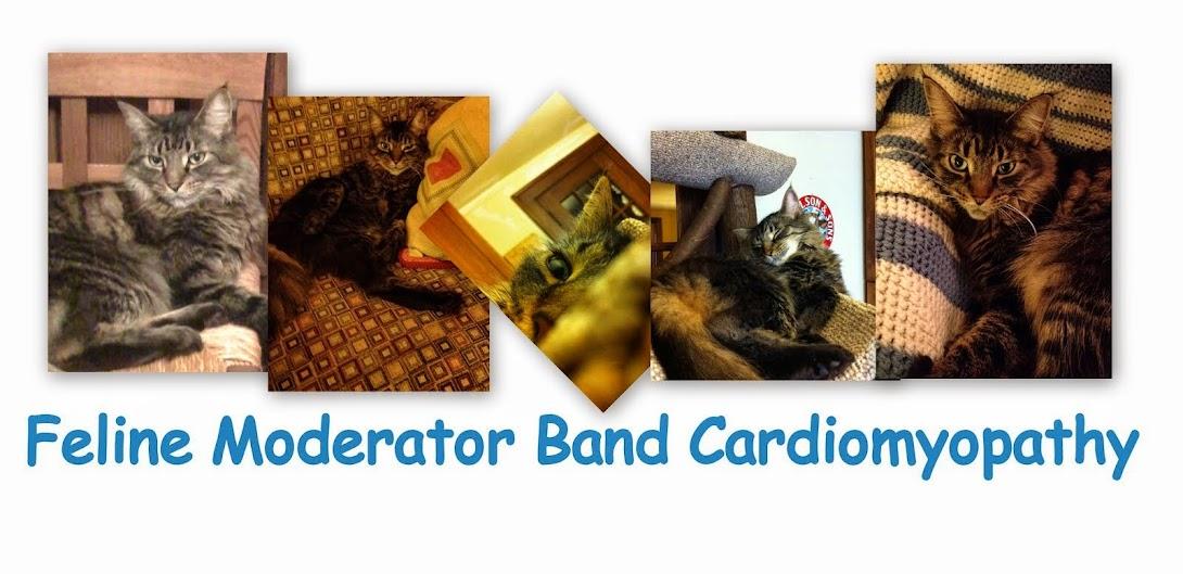 Feline Moderator Band Cardiomyopathy