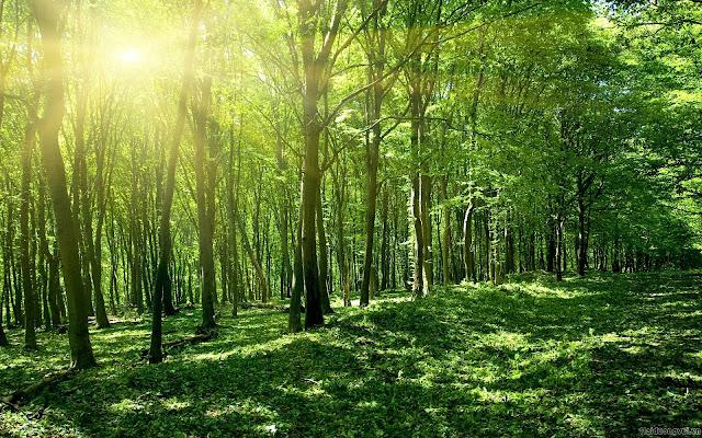 hình nền thiên nhiên núi rừng