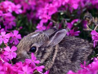 ملف كامل عن اجمل واروع الصور للحيوانات  المفترسة   حيوانات الغابة  14