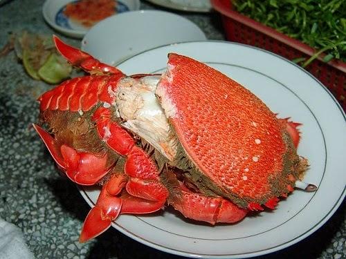 Huỳnh Đế Crab in Phú Yên Province (Cua Huỳnh Đế)2