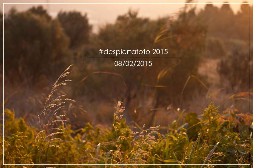 Foto d'entrada pel post pel projecte Despiertafoto 2015 d'Álvaro Sanz. ©Imma Mestre Cunillera