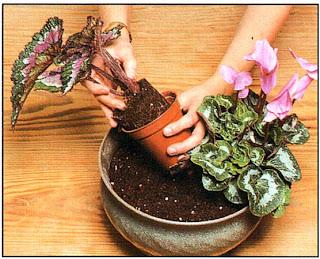 Сначала насыпьте в миску немного почвы, затем разместите растения