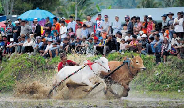 SEJUMLAH penonton menyaksikan pertandingan perlumbaan Pacu Jawi.