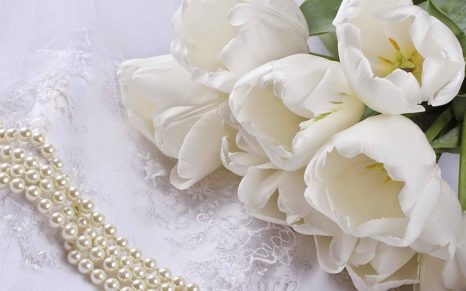 Hd wallpaper top 10 most beautiful flower wallpaper white flower hd pictures izmirmasajfo Image collections