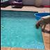 Μια έξυπνη ιδέα σκύλου! Δείτε το βίντεο...