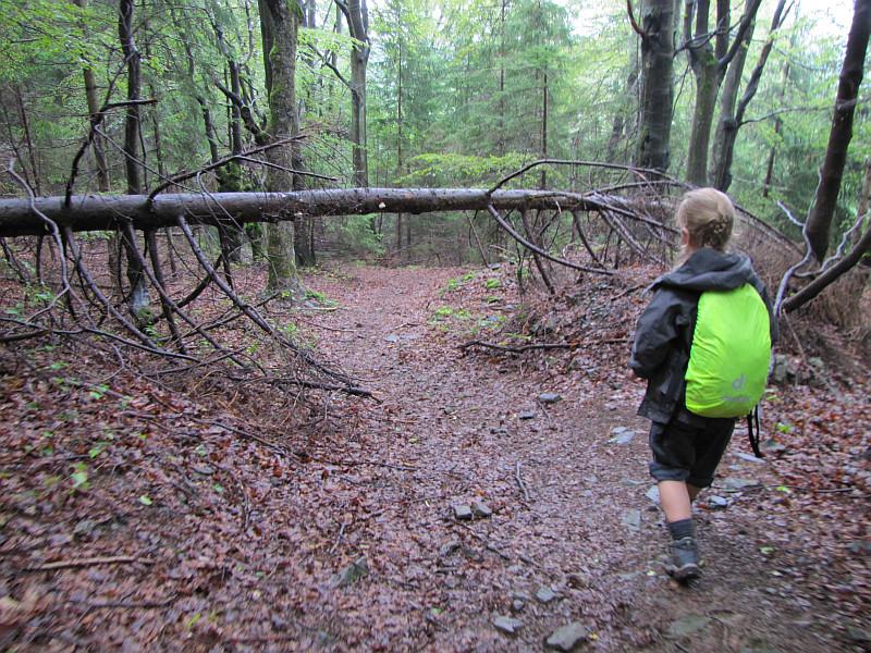 Przed wyjściem z lasu.
