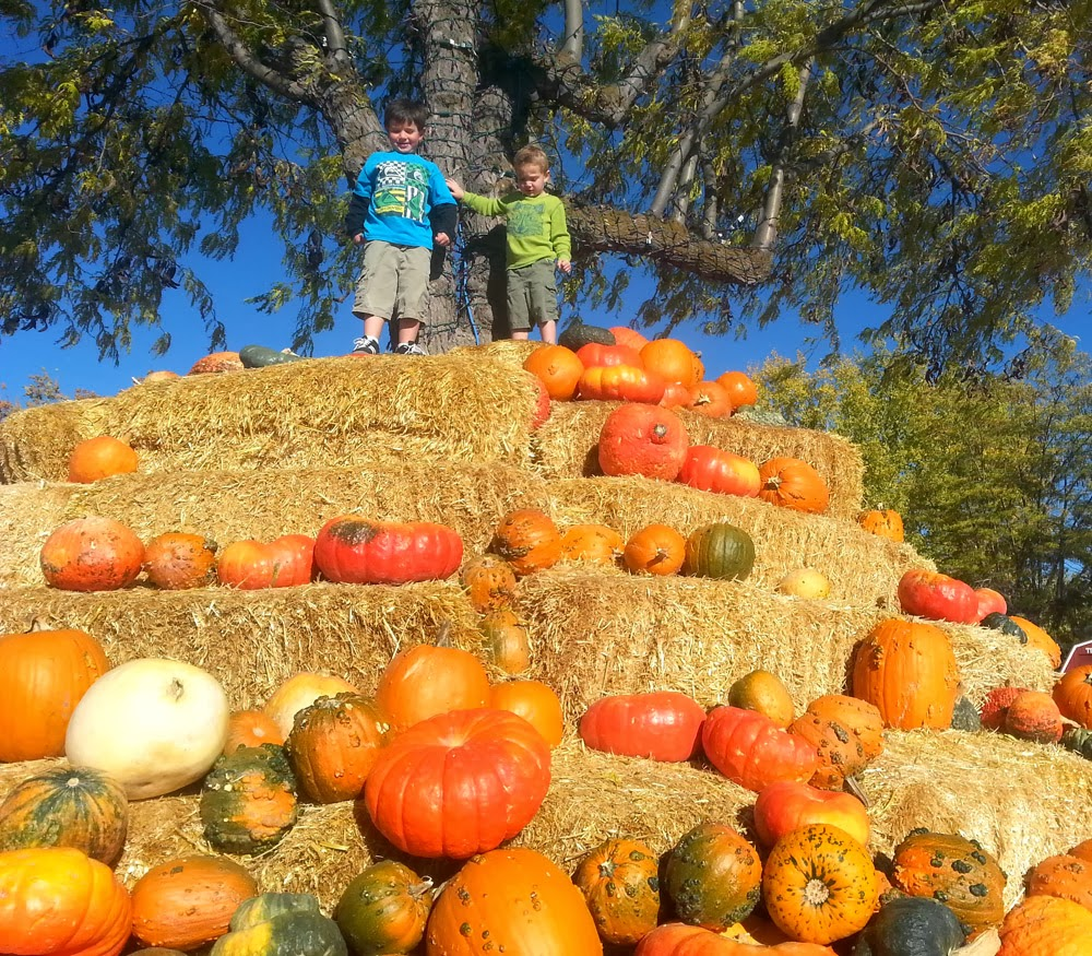 We Went To This Coolest Pumpkin Patch Ever Recently The Boys Very Favorite Part Was Probably Straw Pyramid Actual Choosing