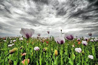 flores hasta las nubes Paisajes con flores naturales