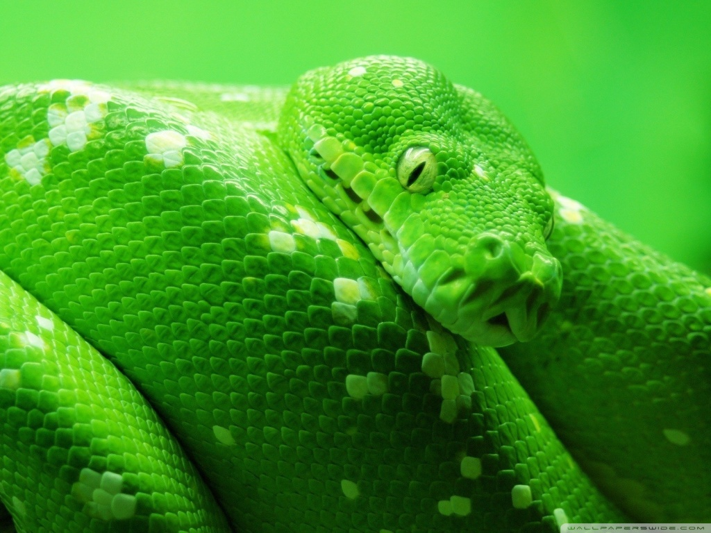 Snake Wallpaper | 3D W... Katy Perry