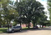 Bur oak along a street in Kearney.