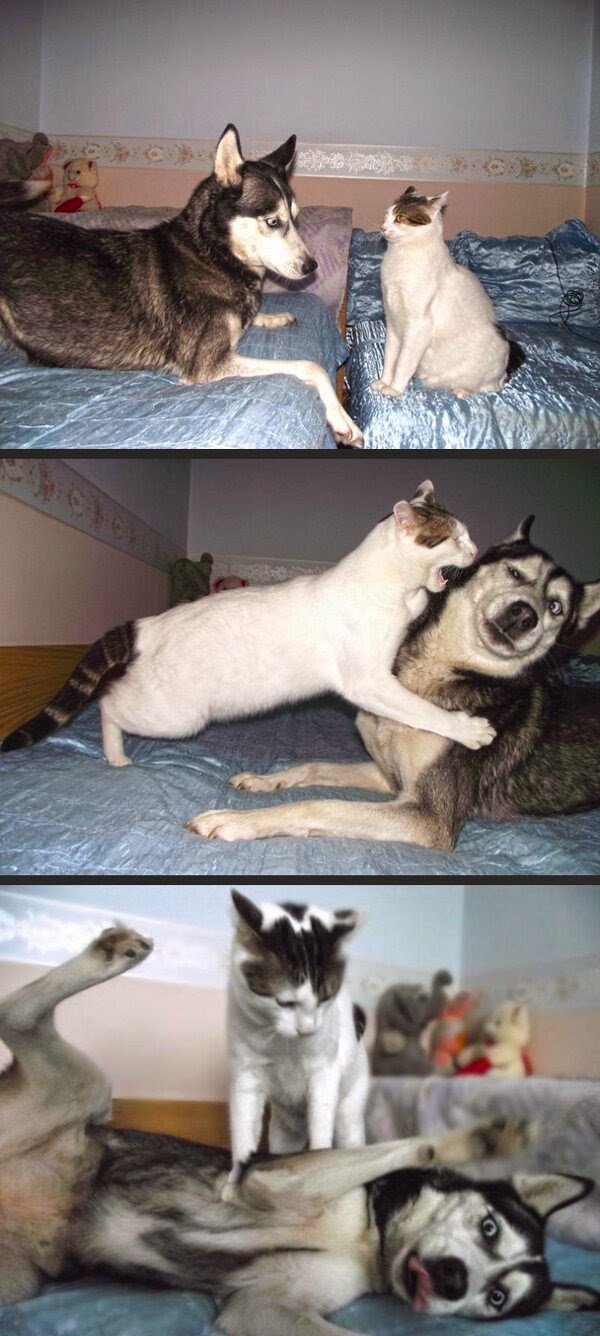 Funny animals of the week - 16 May 2014 (40 pics), animal picture, best animal photos, funny animal