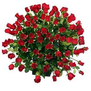 100 szál vörös rózsa