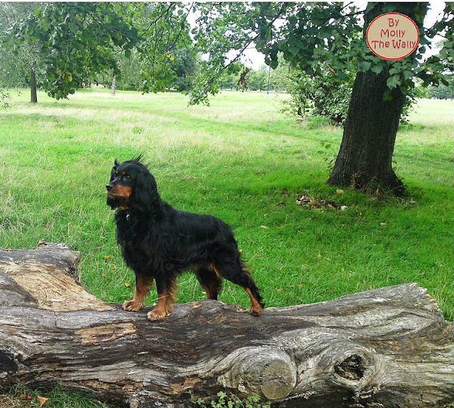 Molly The Wally A Lark In The Park!
