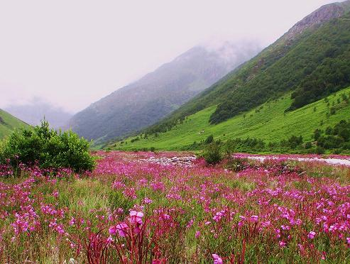 Valley of Flowers trek in the Garhwal Himalayas of Uttarakhand
