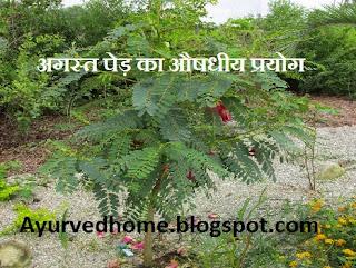 मिर्गी रोग का इलाज अगस्त पौधे से